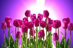 Ce trebuie să faci pentru belsug in ziua Echinoctiului de primăvara