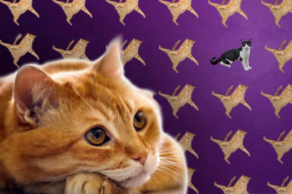 semnificatia viselor pisici 1 585x390 - Interpretarea viselor – Ce înseamnă dacă visezi pisici?