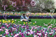 Horoscopul de weekend 2-3 Martie pentru toate zodiile. Mister, farmec și intimitate