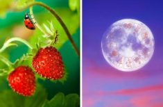 Luna Plină de Luni 17 IUNIE 2019 sau Luna Căpșună a anului – O schimbare majoră de energie