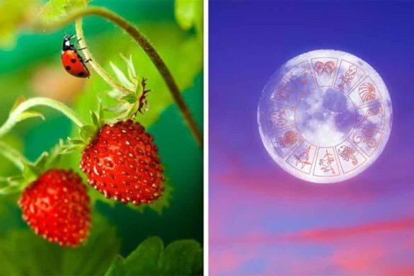 luna plina 17 iunie 2019 585x390 - Luna Plină de Luni 17 IUNIE 2019 sau Luna Căpșună a anului - O schimbare majoră de energie